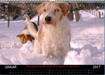 Kromfohrländer Kalender