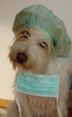 Basti von Asowe - Assistent der Tierarztpraxis Hieber