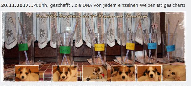 Kromfohrländer DNA-Test